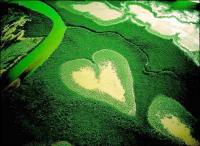 Green Heart Field